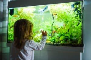 Petite Fille Devant Un Aquarium
