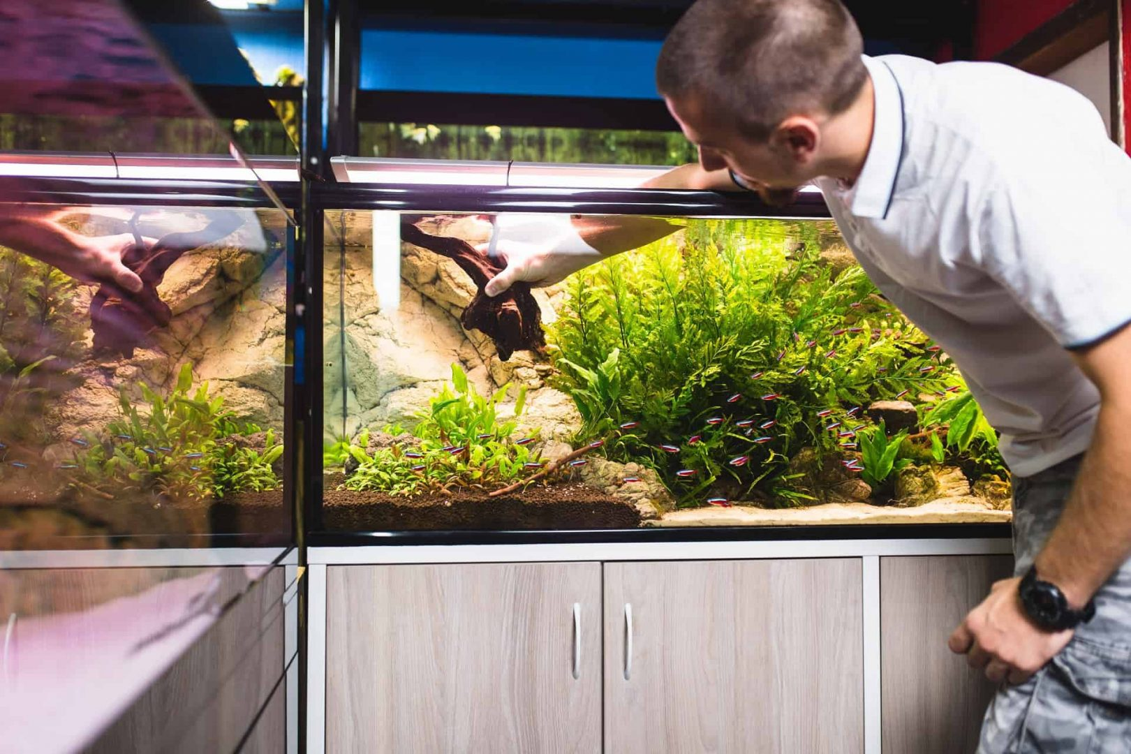 male worker in aquarium shop cleaning fish tenks.